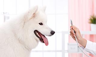 新北方宠物医院腾讯社交广告案例